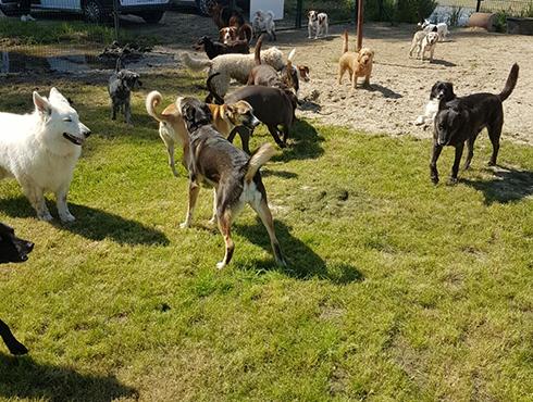 hondenhotel zuid holland